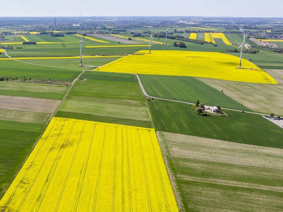 Obraz dekoracyjny przedstawiający pola